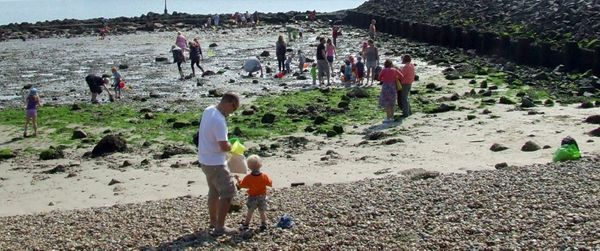 Rockpooling on Shoreham Beach